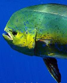 2 Molokai-Sport-Fishing-Trips